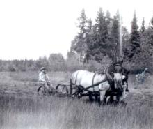 Haying with a team of horses at Meadow Springs Ranch about 1940