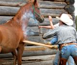 Branding a horse at Meadow Springs Ranch