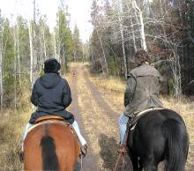 The old Cariboo gold rush trail wagon road